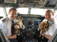 Pilots and puppies