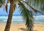 Puerto Rico Palm Tree